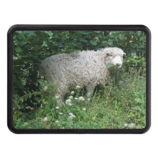 Cute White Fluffy Sheep Eating Hitch Cover