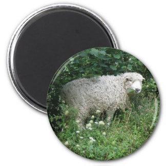 Cute White Fluffy Sheep Eating Magnet