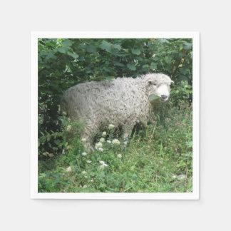 Cute White Fluffy Sheep Eating Napkins