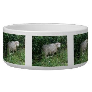 Cute White Fluffy Sheep Eating Pet Bowl