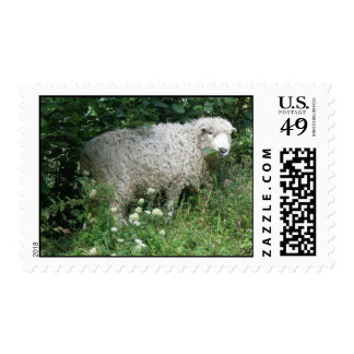 Cute White Fluffy Sheep Eating Postage Stamp