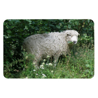 Cute White Fluffy Sheep Eating Premium Magnet