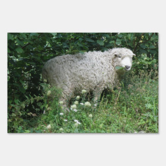 Cute White Fluffy Sheep Eating Sign