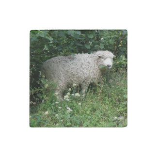 Cute White Fluffy Sheep Eating Stone Magnet