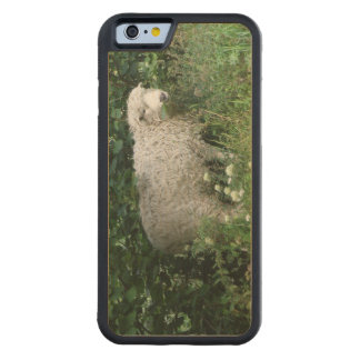 Cute White Fluffy Sheep Eating Wooden Phone Case