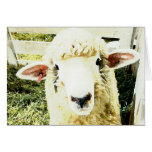 Cute White Fluffy Sheep Greeting Cards