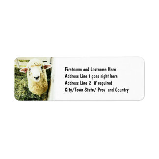Cute White Fluffy Sheep Custom Return Address Label
