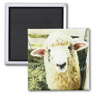 Cute White Fluffy Sheep Magnet