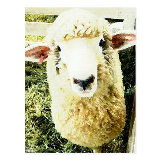 Cute White Fluffy Sheep Postcard