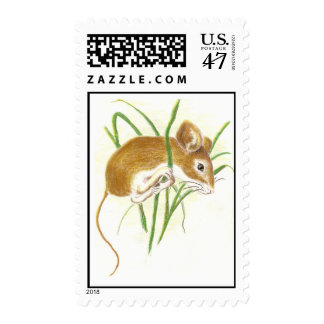 Cute White Footed Mouse, Mice, Animal, Nature Postage