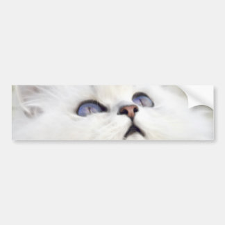 Cute white kitten bumper sticker