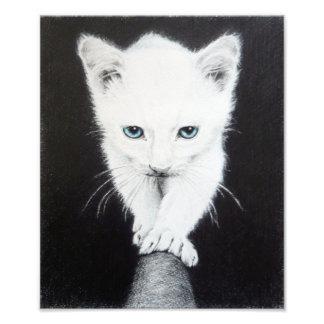 Cute white kitten pencil art Photo print
