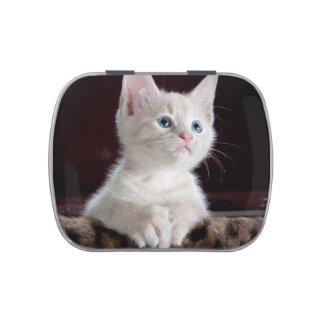 Cute white kitten portrait jelly belly tin