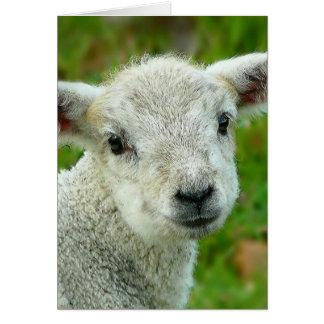 Cute white little lamb greeting card