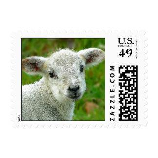 Cute white little lamb postage