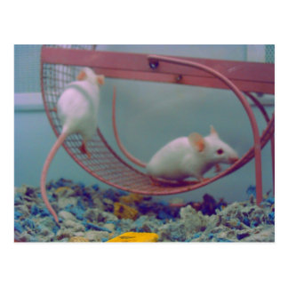 Cute White Mice Postcard