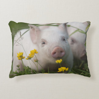 Cute White Piglet in Field of Yellow Flowers Accent Pillow