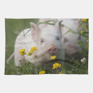 Cute White Piglet in Field of Yellow Flowers Hand Towel