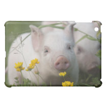 Cute White Piglet in Field of Yellow Flowers iPad Mini Case