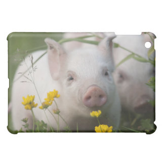 Cute White Piglet in Field of Yellow Flowers iPad Mini Cover