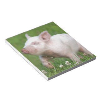 Cute White Piglet Smelling Flower Notepad