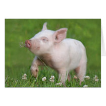 Cute White Piglet Smells a Flower Card