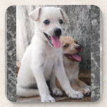 Cute White Puppy Coasters Drink Coaster