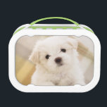 "Cute White Puppy Dog Lunch Box Kids School Food<br><div class=""desc"">Cute White Puppy Dog Lunch Box Kids School Food</div>"