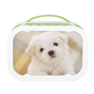 Cute White Puppy Dog Lunch Box Kids School Food at Zazzle