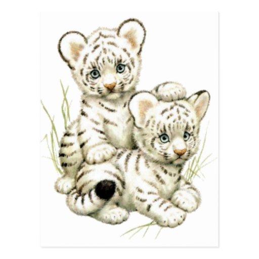 Cute White Tiger Cubs Postcard
