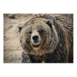 Cute Wild Animal Grizzly Bear Face Large Business Cards (Pack Of 100)