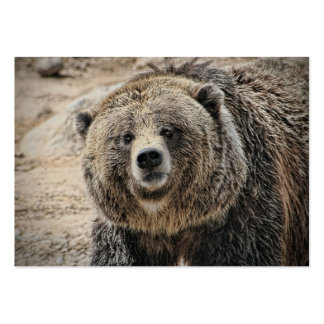 Cute Wild Animal Grizzly Bear Face Business Card Template