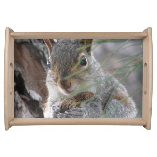 Cute Wild Gray Squirrel With Peanut Serving Tray