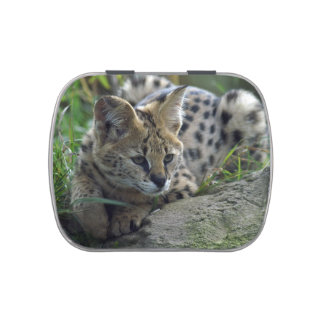 Cute Wild Serval Cat African Safari Peace Destiny Jelly Belly Candy Tins