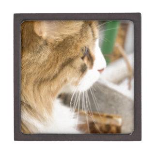 Cute Winter Cat 2 Keepsake Box