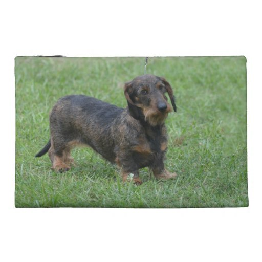 Cute Wire Haired Dachshund Travel Accessories Bags