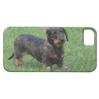 Cute Wire Haired Dachshund iPhone SE/5/5s Case