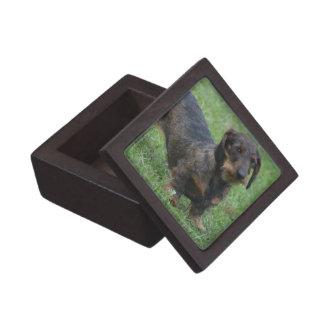 Cute Wire Haired Dachshund Premium Gift Box