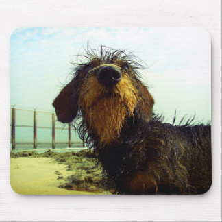Cute wired hair Dachshund face Mouse Pad