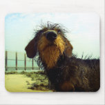 Cute wired hair Dachshund face Mouse Pads