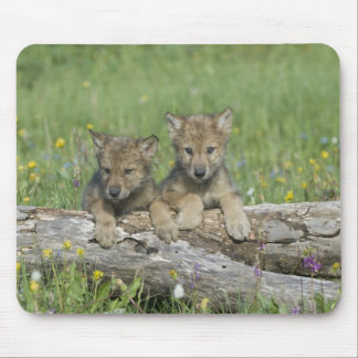 Cute Wolf Cubs Mousepad