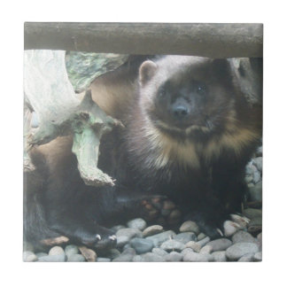 Cute Wolverine Ceramic Tile