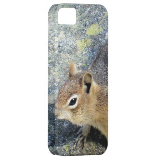 Cute Woodland Chipmunk on a Rock iPhone 5 Cases