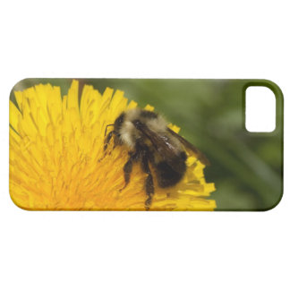 Cute Worker Bee iPhone 5 Case