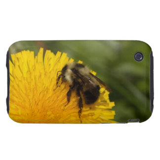 Cute Worker Bee Tough iPhone 3 Covers