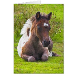 Cute Yearling Foal blank notelet / card