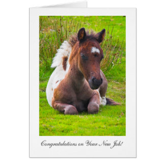 Cute Yearling Foal - Congratulations on New Job Card