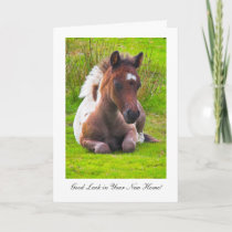 Cute Yearling Foal - Good Luck In Your New Home Card