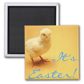 Cute yellow baby Chick Happy Easter! magnet