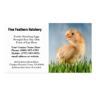 Cute Yellow Baby Chick Photo Business Card Templates